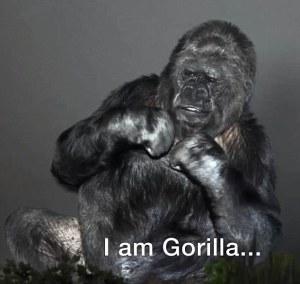 """I am Gorilla"""